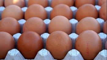 غلاء كرتونة البيض