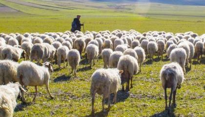رغم ارتفاع معدل البطالة.. تركيا تستعين بـ«رعاة ماشية أفغان»