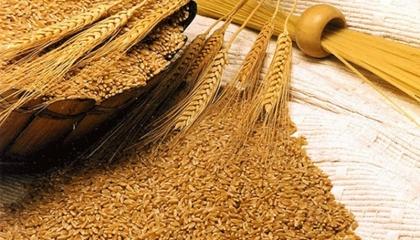 المرصد السوري: تركيا تنهب محصول القمح من «تل أبيض»