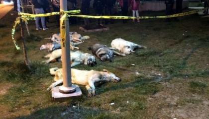 محكمة تركية تسجن 3 أشخاص 13 عامًا لكل منهم لقتلهم 16 كلبًا