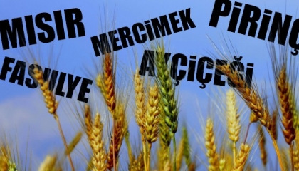 بالأرقام.. تركيا على حافة مجاعة بسبب نقص المنتجات الزراعية
