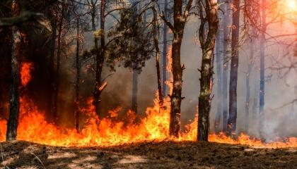 حريق هائل بغابات إسطنبول.. وتركيا تستعين بطائرات هيلكوبتر  بعمليات الإطفاء