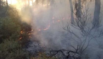اندلاع حريق هائل في منطقة غابات بجزيرة «بيوك أضة» التركية