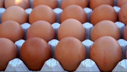 ارتفاع سعر البيض التركي: «لا تلوموا أردوغان.. بل لوموا الدجاجة الخائنة»!ّ