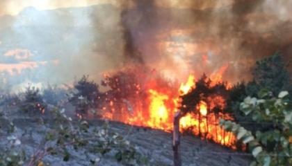 بالصور.. حريق هائل في قرية كويوبيلي بمدينة أضنة التركية