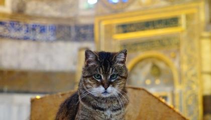 إسطنبول تعلن وفاة القطة «جلى»..  أيقونة آيا صوفيا