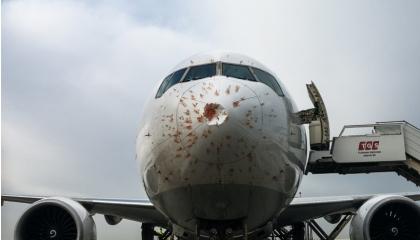 بالصور.. سرب طيور يجبر طائرة تركية على الهبوط بعد حادث مروع