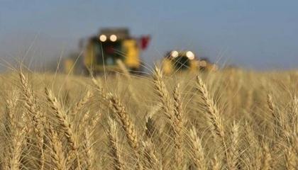 تركيا تحطم رقمًا قياسيًا جديدًا في استيراد القمح تحت حكم «العدالة والتنمية»