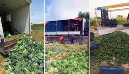 بالفيديو.. المزارعون الأتراك يلقون بأطنان المحاصيل الزراعية في القمامة