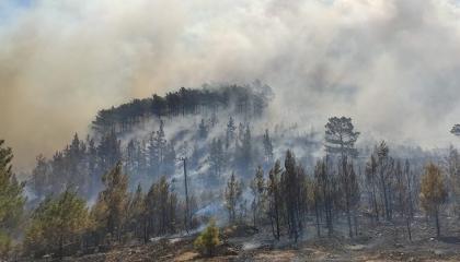 حرائق ضخمة في غابات تركيا بولايات أنطاليا ومرسين وأضنة