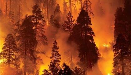 نشرة أخبار «تركيا الآن»: حرائق الغابات تكلف تركيا خسائر بشرية ومادية فادحة