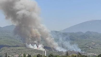 اندلاع حريق جديد بغابات هاتاي التركية.. والسبب غير معلوم