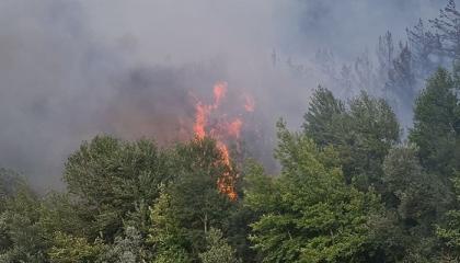 حريق هائل بغابات الصنوبر الأحمر في محافظة بالكسير التركية