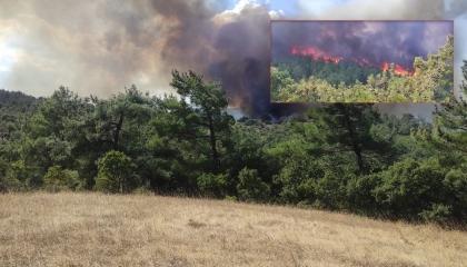 جهود برية وجوية للسيطرة على حريق بغابات تشاناكالا التركية