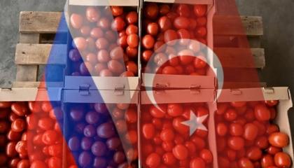 موسكو ترفع حظر استيراد الطماطم والفلفل من تركيا