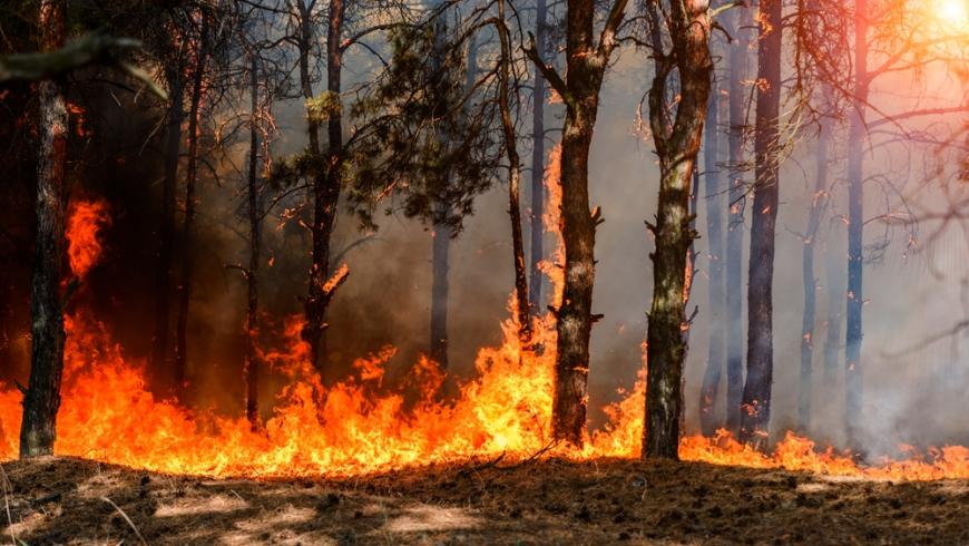 حريق الغابات التركية