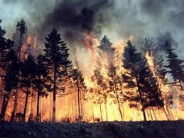 حرائق غابات اسطنبول